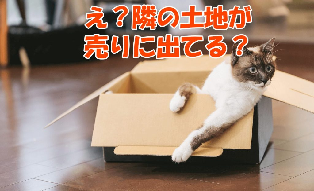 隣の土地が売却に出てびっくりしている猫